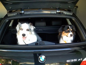 Poeka (L), Tubby (R) @ 535xi 2008 station wagon